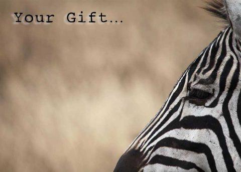 Zebra-Gift-card
