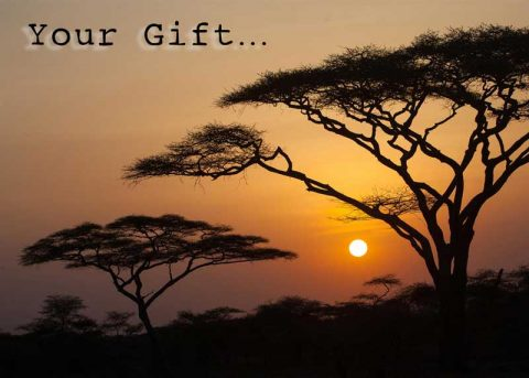 africa-charity-gift-card