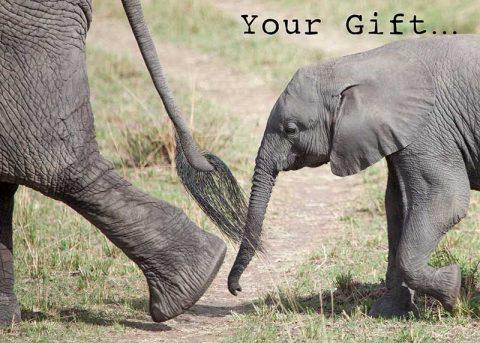 africa-animal-donation