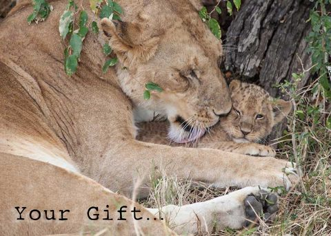 africa-charity-gift